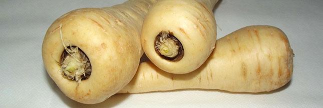 panais-legume-alimentation-ban