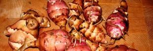 Légumes anciens : cet hiver et pour les fêtes, cuisinez les légumes oubliés !