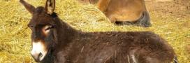 Un âne itinérant offre du courant électrique en Macédoine!