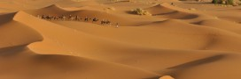 Idée reçue: il n'y a presque pas d'animaux dans le désert