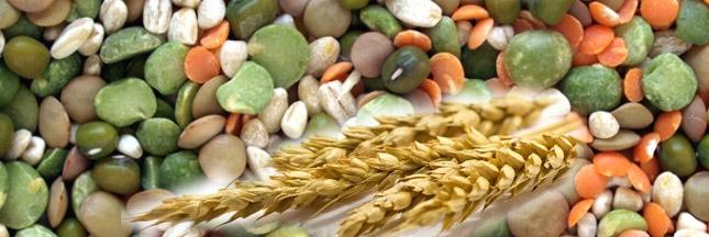 fibres-alimentaires-legumineuses