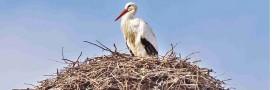 Idées reçues: les oiseaux dorment dans un… nid d'oiseau
