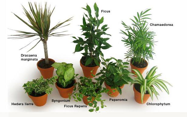 Les plantes peuvent elles d polluer l air int rieur - Plante de l interieur ...