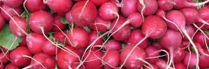 Pour la récolte, on attendra encore mais on peut déjà semer les radis.