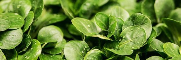 Légumes de saison : le panier AMAP du mois de mars