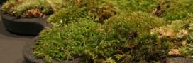 Tendance verte: le tapis de bain végétal
