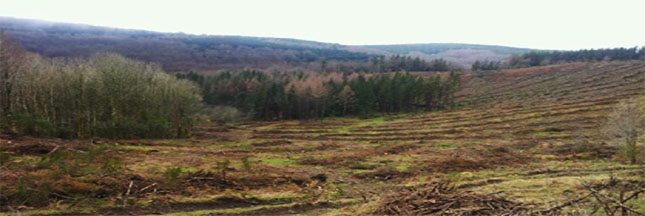 Crowdplanting : incitez les entreprises à planter des arbres !
