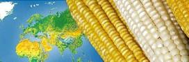 La culture des OGM recule dans le monde – vrai ou faux?