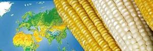 OGM-surfaces-monde