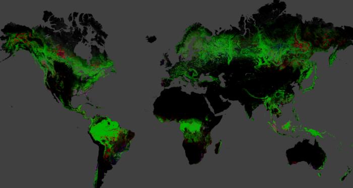 carte-deforestation-google