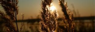 La crème solaire amène-t-elle plus de cancers ? (3/3)