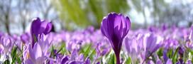 Jardiner en mars: le jardin au début du printemps, le potager