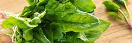 Les épinards, alliés de fer pour un printemps plus vert