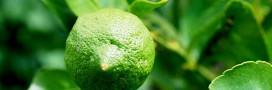 Réduire l'anxiété avec le citron vert