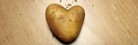 Jardinage – À faire en avril: planter des pommes de terre