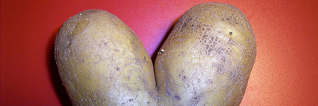 planter-pomme-de-terre-patate-agriculture-02-ban