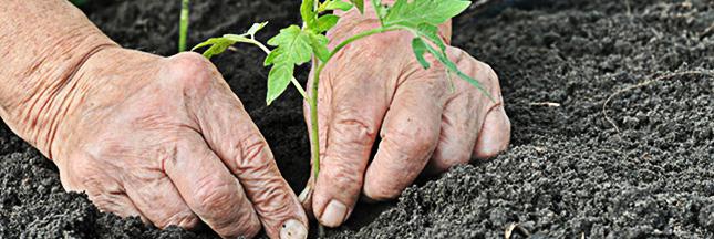 Plantes : que faire au jardin ce mois-ci ? la fiche pratique