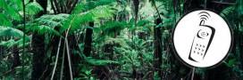 Pour sauver l'Amazonie, les arbres équipés de téléphones portables!