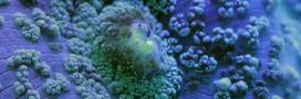 Etonnant : le réchauffement fait une pause en eaux profondes