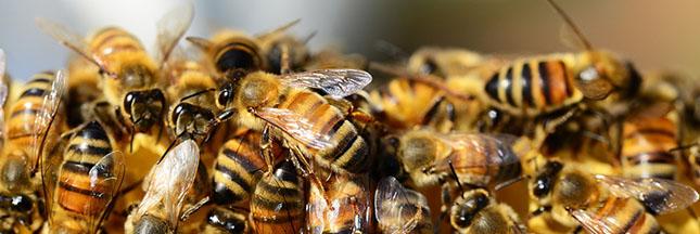 Arrêtons le massacre des abeilles !