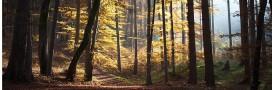 La sylvothérapie ou quand les arbres soignent nos maux