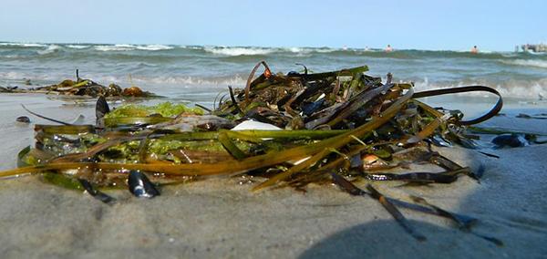 algues-mer-plage-ocean-04