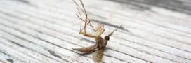 Les anti-moustiques au DEET aussi dangereux que des pesticides?