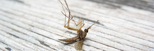 anti-moustique DEET