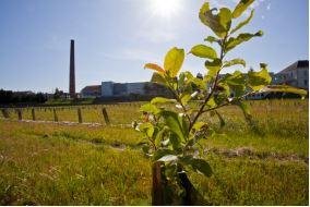 arbre-vert-plantation