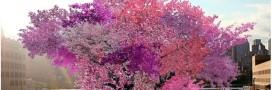 L'arbre aux 40 fruits: prouesse environnementale ou étrange création?