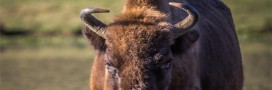 A la rencontre de la grande faune sauvage … en France