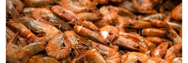 Les crevettes d'Asie, les esclaves modernes et nous