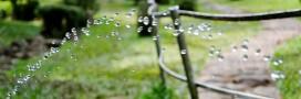 Economiser l'eau: comment bien arroser le jardin?