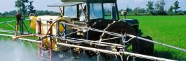 Pesticides et biodiversité : on sait quelles espèces meurent