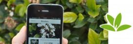 Pl@ntNet: une application qui identifie les végétaux!