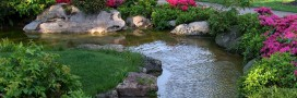 Jardin écologique. Comment créer une mare naturelle ?