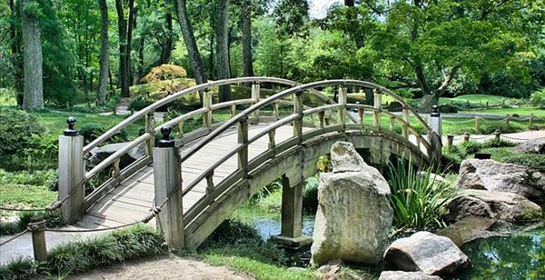 Entretien piscine naturelle Chalon sur Saône : bassin de jardin, aquarium