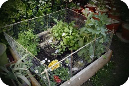 Micro-jardin 1