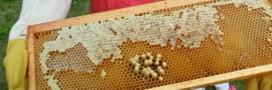 Des micro-plastiques partout, même dans le miel !