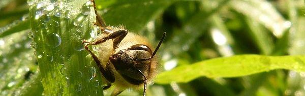 abeilles-pesticides