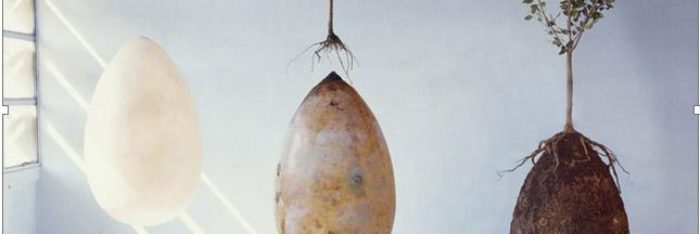 Capsula mundi, l'urne funéraire qui fait pousser des arbres