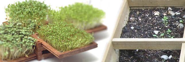 Micro-jardin: la tendance de demain?