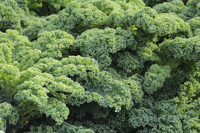 chou Kale detox