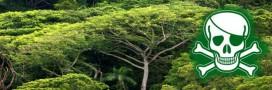Protocole de Nagoya, l'espoir de justice contre la biopiraterie