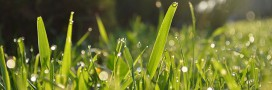 Jardin bio: semer un gazon naturellement (et l'entretenir)