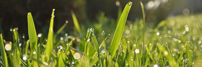 Jardin bio : semer un gazon naturellement (et l'entretenir)