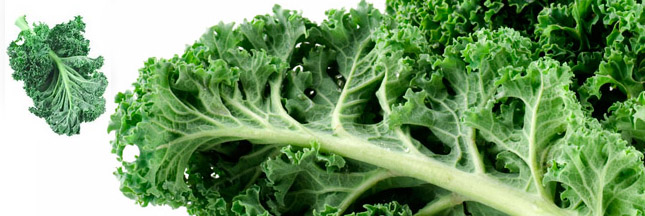 Le kale, une histoire de chou débarque en France