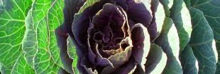 Fait Maison : jus vert de légumes et fruits au chou Kale