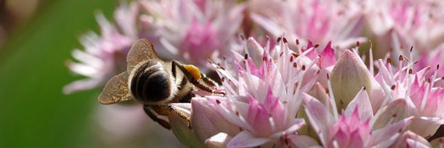 miel-abeilles-fleurs-02-ban