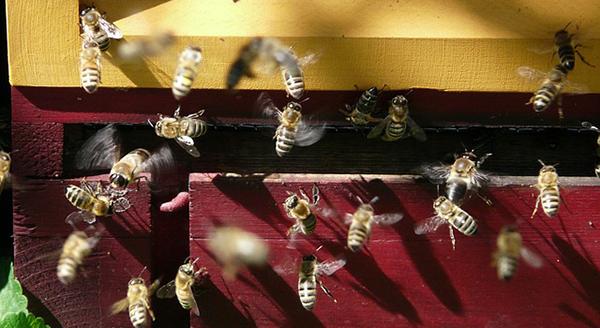 miel-abeilles-fleurs-04